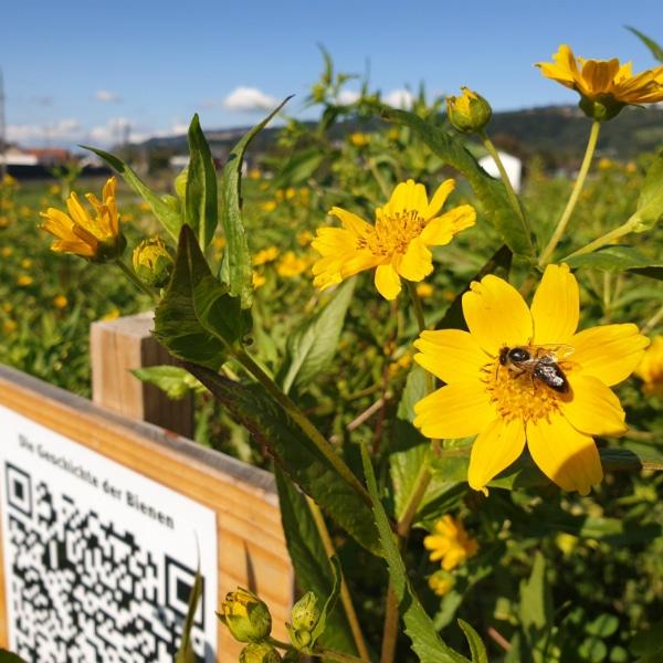 Bienenwiese Blumeninfo 6