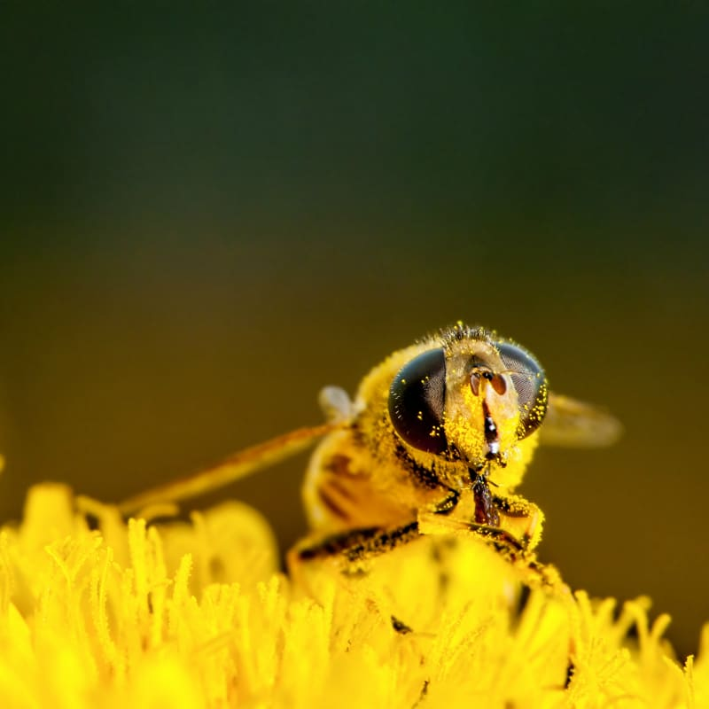 VOLhighspeed Geschichte der Bienen Biene Pollen