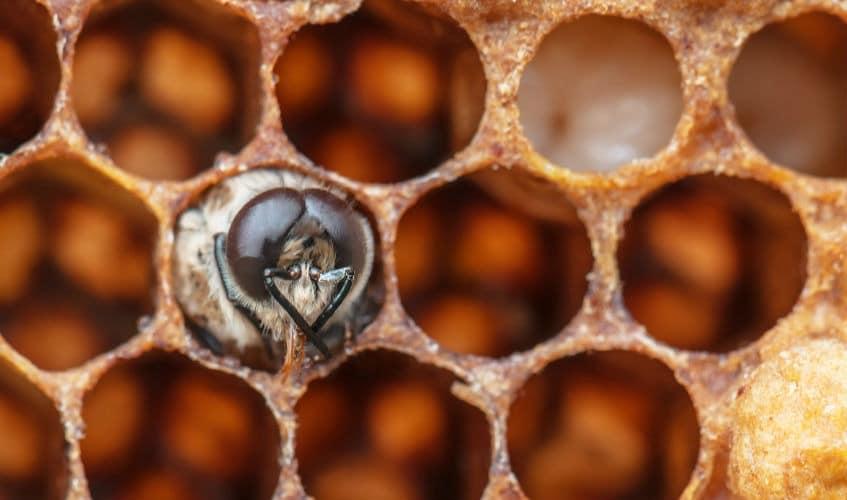 Das Leben aus der Sicht einer Arbeiter-Biene 3