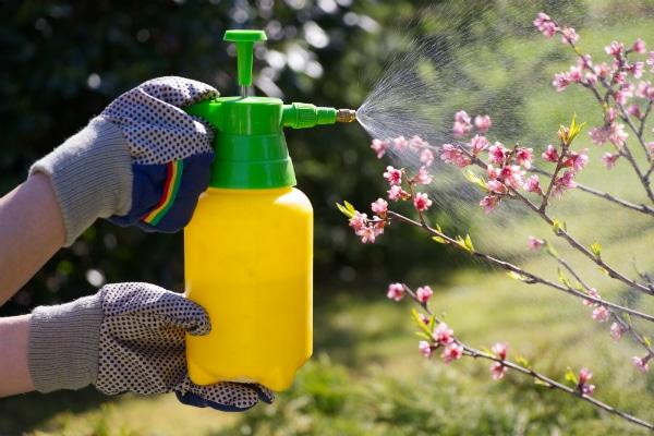 Tipps & Tricks für Bienen-Liebhaber 11