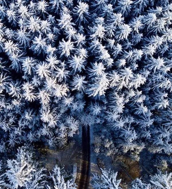 Drohnenfotografie: Tannen im Winter (Senkrechtsicht)