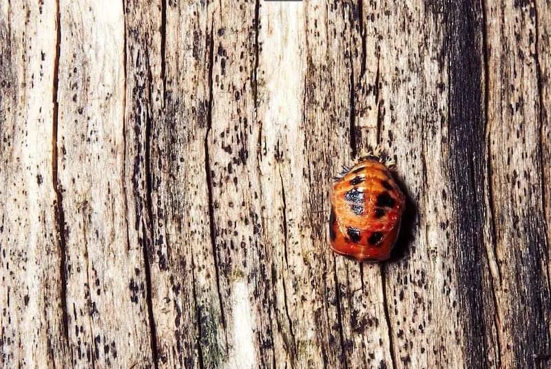 Makrofotgrafie: Holzhintergrund