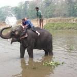 Elephant washing in Chitwan