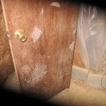 Photo shows a interior basement door covered with toxic mold.