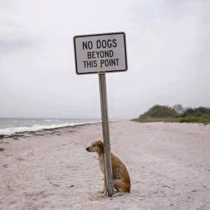 "Photo of a dog sitting just past a ""No Dogs Beyond This Point"" sign"