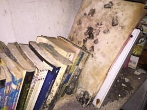Volunteer Mold Knoxville image of mold growing on books on a shelf.