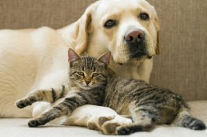 Dog and Cat lying together on sofa.