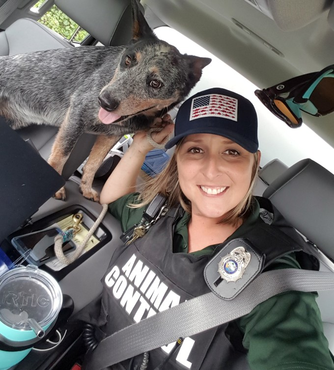 Volusia County S Animal Control Officers A Voice For The Voiceless