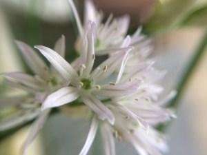 Titel-Blume-von-Knobloch-2