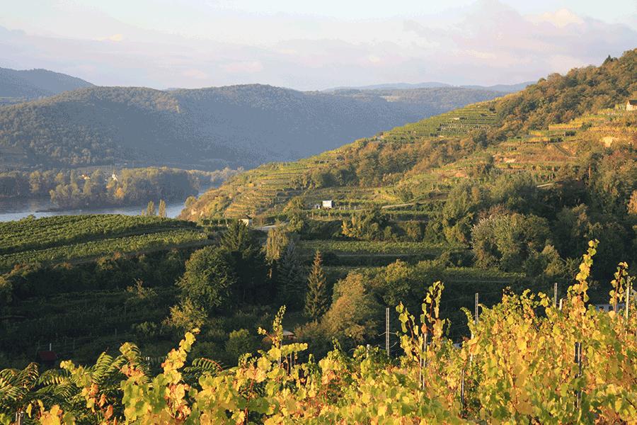 VONsociety: Winzer in der Krise, Blick über die Weinbergterrassen des Weinguts Salomon Undhof, Wachau