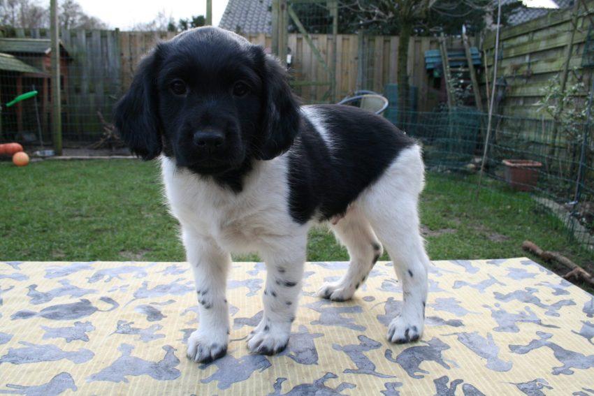 Wout pup 4 - 7 weken