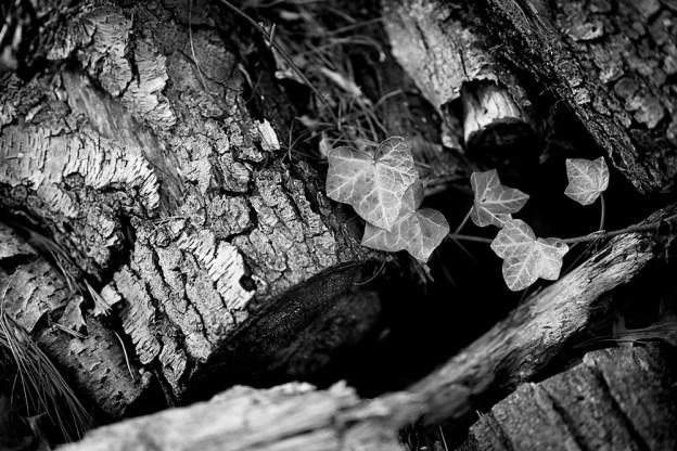 Winter Break Project: Photography