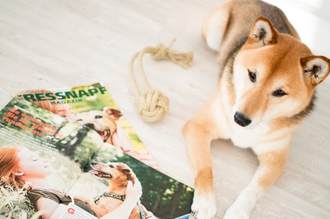 Fressnapf Magazin DIY Affenfaust Tauball Hund Shiba Inu