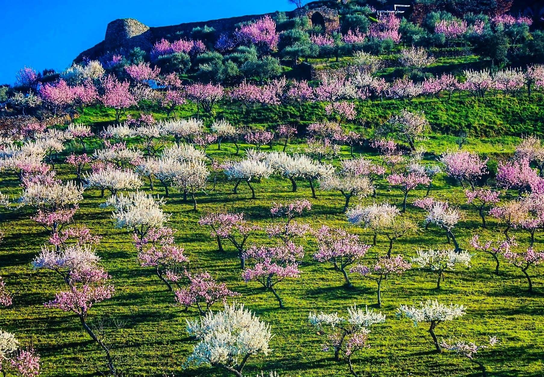 Primavera em Trás-os-Montes - Maria Flor