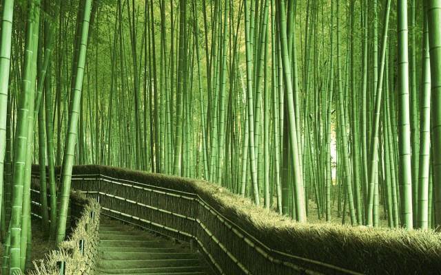 Bamboo-Forest-Path