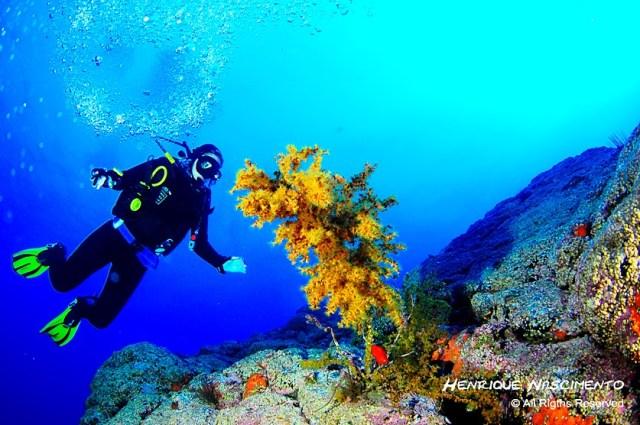 melhores locais para praticar mergulho em Portugal