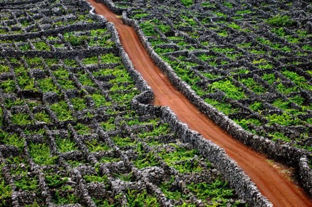 Rota do vinho dos Açores