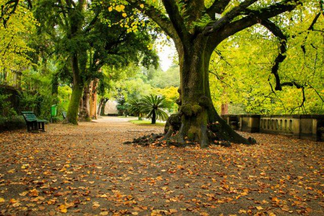 Jardim Botânico Coimbra