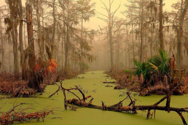 Pântano de Manchac (Louisiana, Estados Unidos)