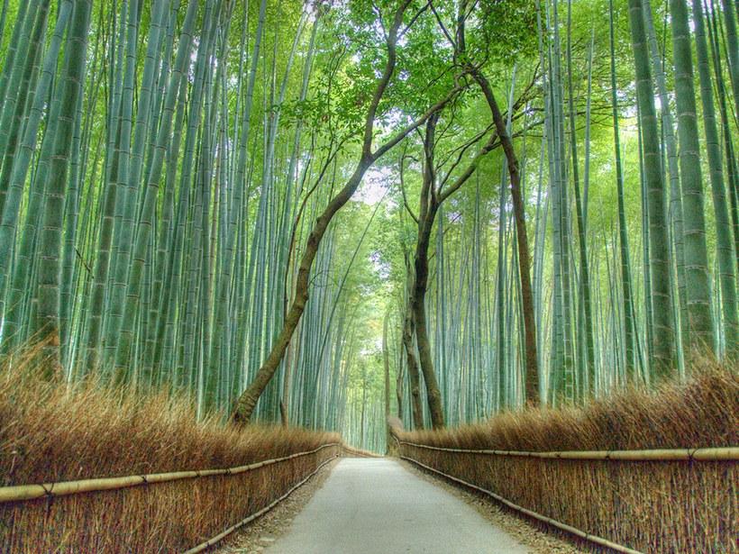 Arashiyama, Kyoto, Japão