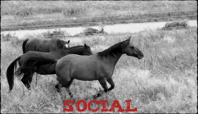 "Image of horses galloping together with text ""Social"""