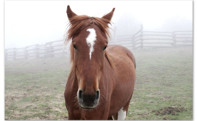 Springy Horsey Mist