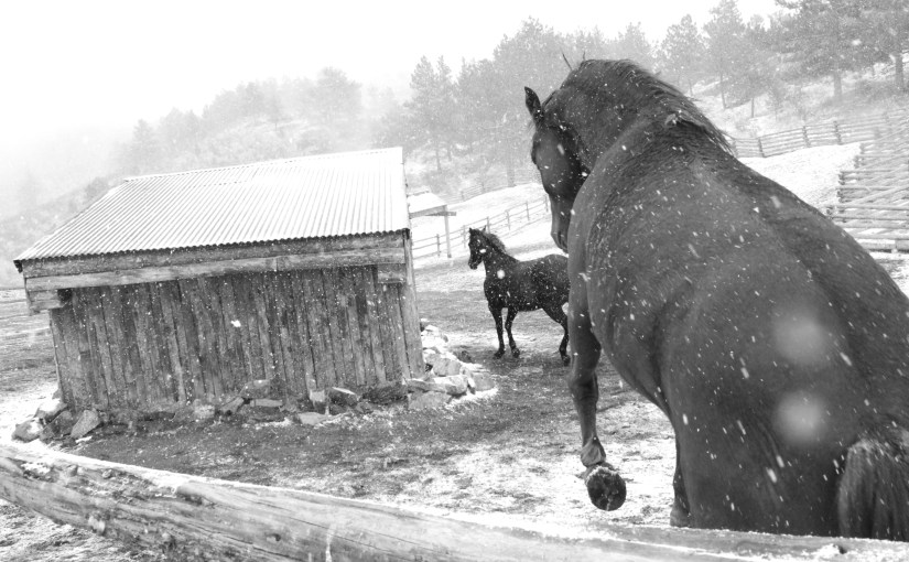 Old Black and White Horse Pics…