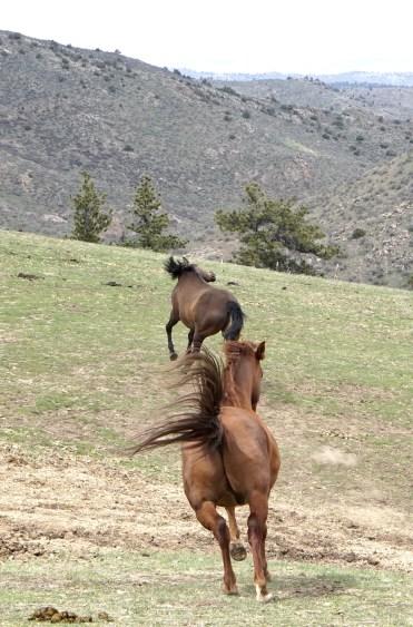 A Springtime Run