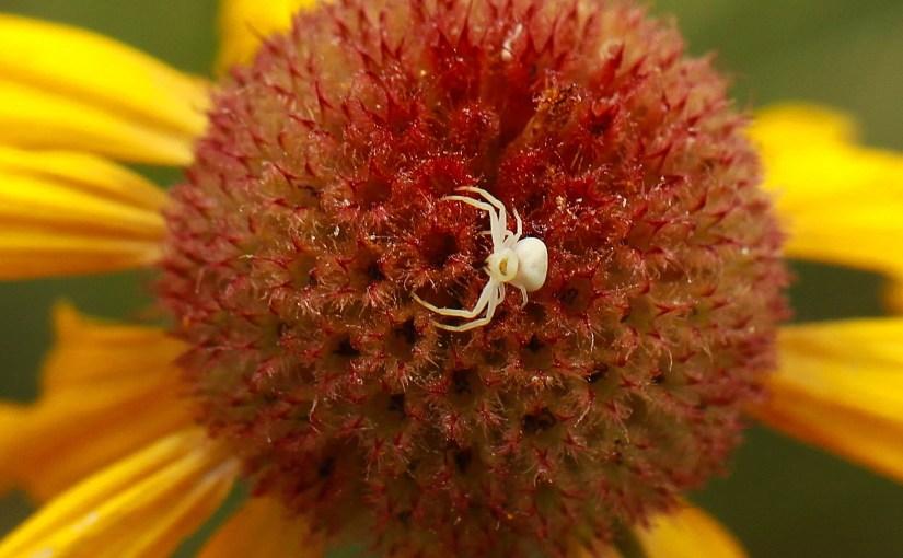 <em>tiny flowa spider</em>