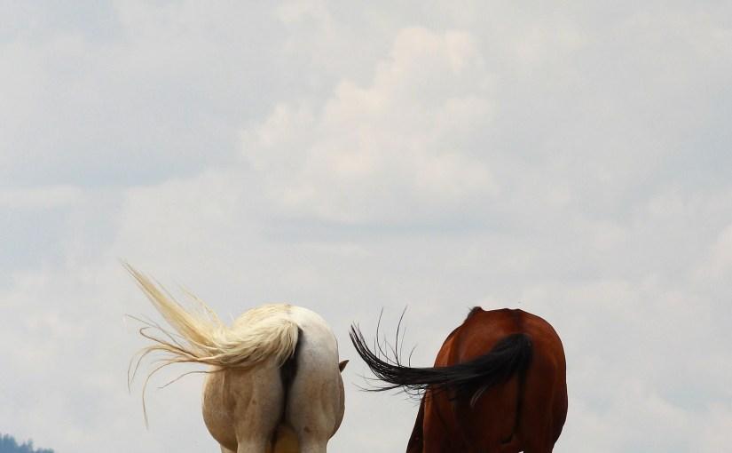 Real Pasture Buddies