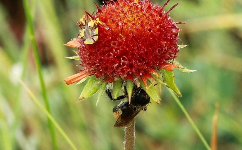Rain Bee 🐝