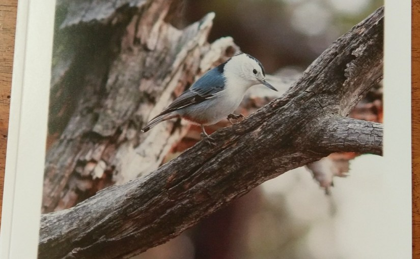Wunderland Magazine – <em>The Nuthatches of the West</em>