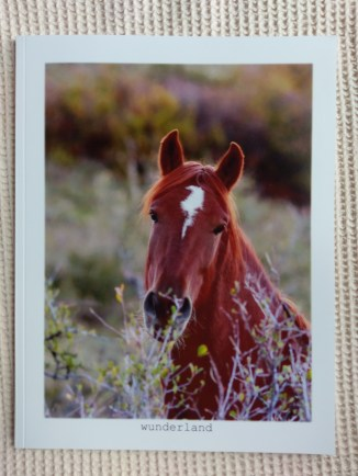 Front cover of Equine Portraiture