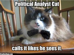 political analyst cat