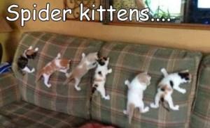 spider-kittens
