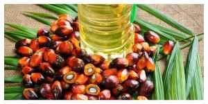 De l'huile de palme dans les voitures...La France est pointée du doigt