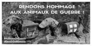 Hommage aux animaux de guerre : Paris accepte de leur ériger un monument