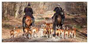 Des rassemblements anti-chasse à courre sont organisés ce samedi