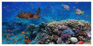 La biodiversité se meurt, nos modes de vie sont en sursis
