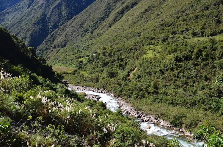 salkantay trek jungle