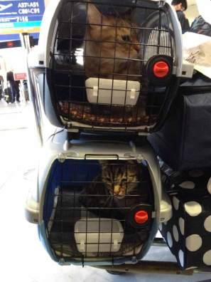 emmener-chat-montreal