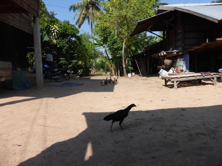 vivre en thailande asie