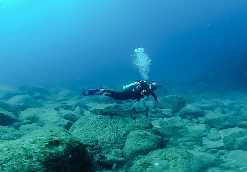 mergulho-fernando-de-noronha