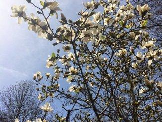 primavera-na-alemanha