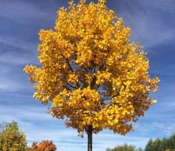 Outono-na-Alemanha (1)
