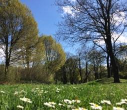 Primavera-na-Alemanha (2)