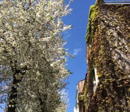 Primavera-na-Alemanha (5)