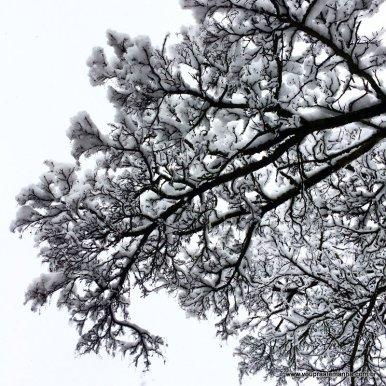 Munique-com-neve (6)