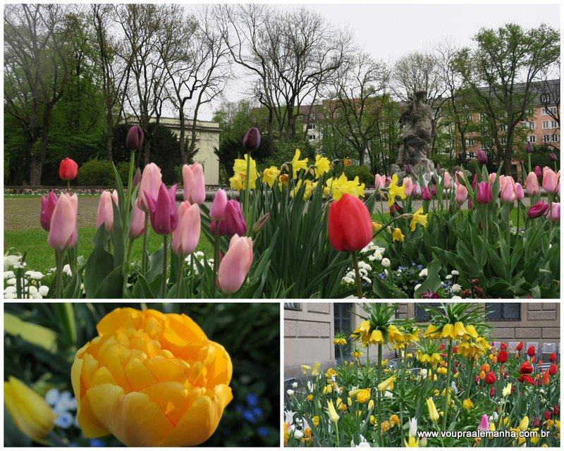 Tulipas na primavera em Munique