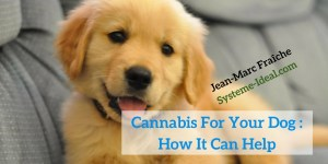 Cannabis-For-Your-Dog-How-It-Can-Help-Jean-Marc-Fraiche-VousEtesUnique.com